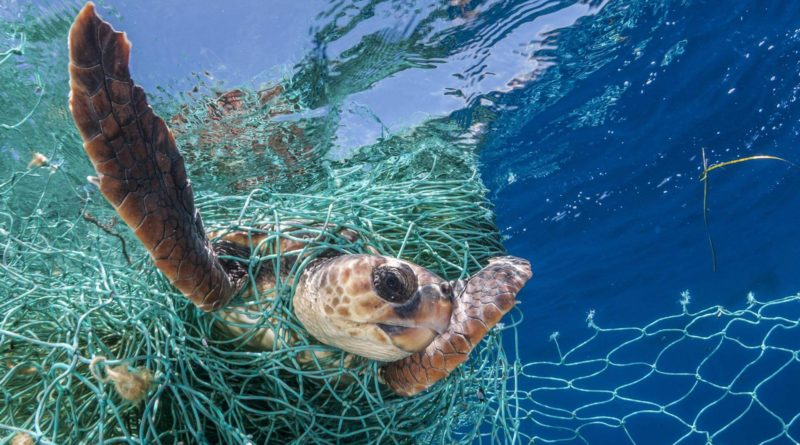 turtle in net