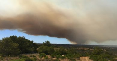 Forest fire in Aljezur district, Bordeira